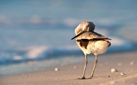 Обои песок, птица, чайка, берег, море