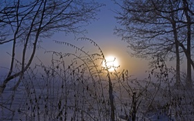 Обои холод, зима, небо, солнце, снег, деревья, ветки