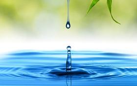 Обои вода, круги, лист, капля, всплеск