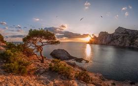 Картинка море, небо, солнце, облака, закат, птицы, скалы