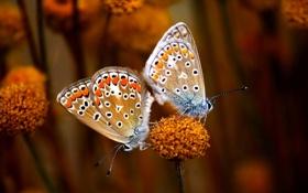 Обои цветок, бабочьки, True Love