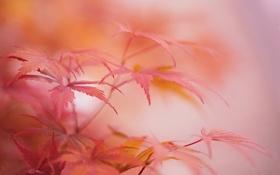 Картинка осень, листья, макро, растение