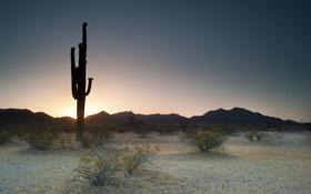 Обои закат, природа, вечер, кактусы, sunset, Saguaro National Park