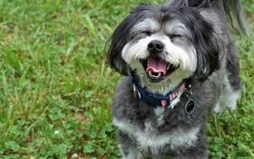 Картинка радость, настроение, собака