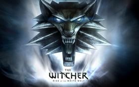 Обои witcher, белый волк, медальен