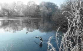 Картинка зима, снег, озеро, иней