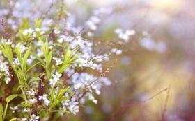 Обои весна, веточки, цветы