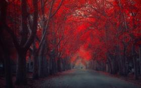 Картинка деревья, город, улица