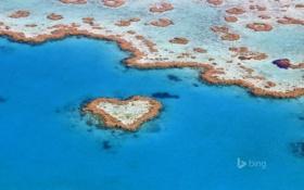 Обои море, океан, сердце, кораллы, риф