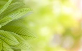 Картинка природа, растения, листики