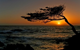 Обои море, волны, закат, дерево, кривое