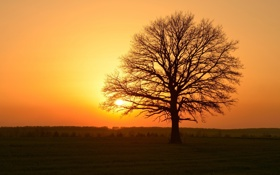Картинка пейзаж, закат, природа, дерево