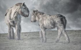 Картинка природа, туман, кони