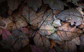 Картинка осень, листья, вода, капли, роса