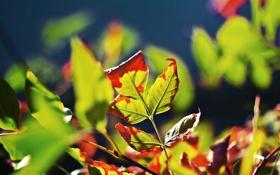 Обои осень, листья, оранжевые листья, сухие листья