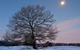 Обои зима, лес, снег, скамейка, дерево, мороз