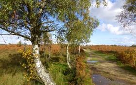 Обои дорога, поле, осень, небо, дерево, лужа
