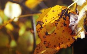 Обои осень, листья, сердце, сердечко