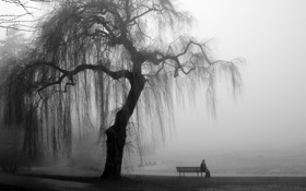 Обои дерево, серость, берег, лавочка, мужчина, ива