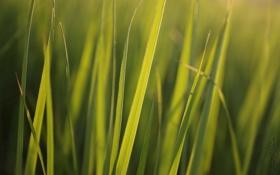 Обои зелень, трава, солнце, макро
