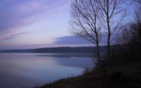 Обои лес, озеро, дерево, сумерки