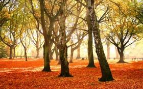 Обои листья, убор, осень, деревья, Autumn forest, красочный, багряный