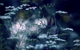 Обои природа, обои, растения, wallpapers, цветения