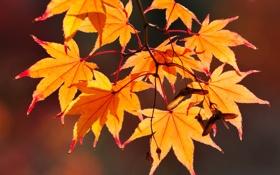 Картинка листья, ветка, семена