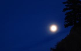 Картинка силуэты, небо, природа, яркая луна, ночь, дерево