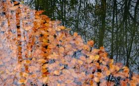 Обои листья, осень, река