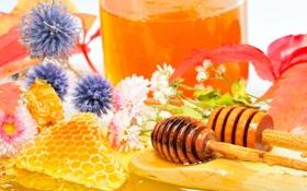 Картинка ложка, honey, мед, деревянная, соты, цветы