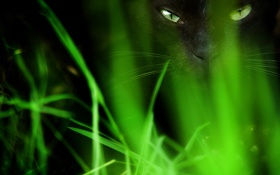 Обои трава, глаза, кот, черный