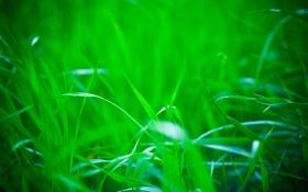 Обои зелень, природа, Трава