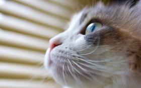 Картинка кошка, морда, макро