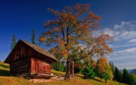 Картинка лес, осень, избушка, трава, небо, облака, домик