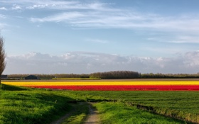Картинка дорога, поле, цветы, природа