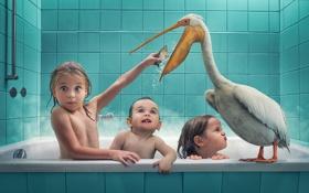 Обои дети, птица, рыба, ванна