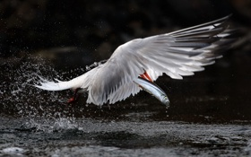 Картинка вода, птица, рыба