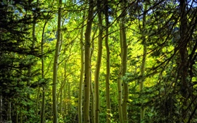 Картинка лес, ветки, природа, стволы