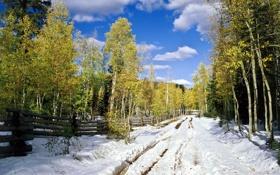 Картинка зима, дорога, лес, снег, фото, забор, березы