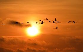 Обои небо, закат, птицы, природа, полёт