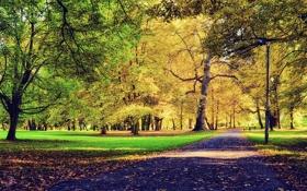 Обои листья, осень, трава, деревья, путь, парк, скамейки
