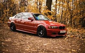 Обои осень, лес, листья, BMW, красная, e46