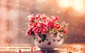 Обои капли, гвоздики, чашка, лепестки, вода, макро, цветы