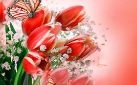 Обои бабочки, цветы, букет, тюльпаны, flowers, tulips, flowers and butterflies