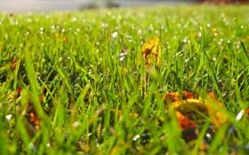 Обои капли, размытость, трава, листва, роса