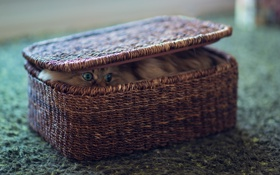 Картинка Cat, Ben Torode, Basket