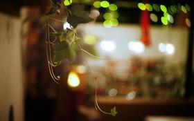 Картинка листья, веточка, ветка, зеленые