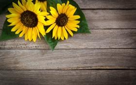 Картинка подсолнухи, цветы, дерево