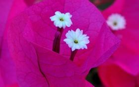 Обои листья, цветы, природа, растение, лепестки